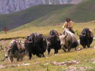 Yak-Hirte auf dem Tibetischen Hochplateau