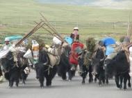 Nomaden auf dem Tibetischen Hochland