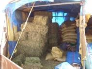 Zufutter in Marokko