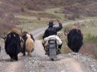 Yak-Hirte auf dem Tibetischen Hochland